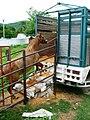 Loading more horses.jpg