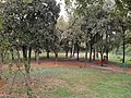 Lodi - parco dell'Isola Carolina.jpg