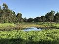 Logan River Parklands, Beenleigh, Queensland 02.jpg