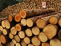 Logs, Huxham's Cross - geograph.org.uk - 1069009.jpg