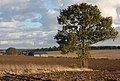 Lone tree in a ploughed field - geograph.org.uk - 1573975.jpg