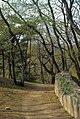 Longevity Hill 2008.jpg