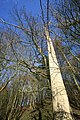 Looking Up a Tree - geograph.org.uk - 1178692.jpg