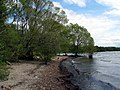 Lough Neagh Shoreline - geograph.org.uk - 1313618.jpg