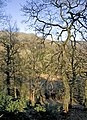 Lyncombe Wood - geograph.org.uk - 693099.jpg