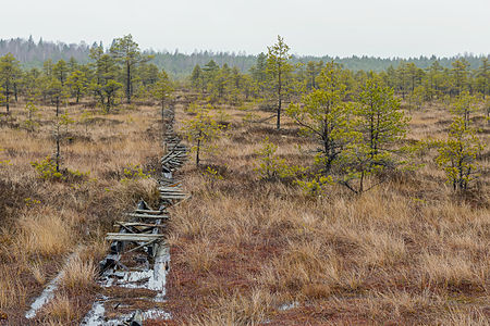 Old boardwalk at Männikjärve bog