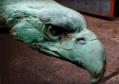 Märkisches Museum (Berlin), Bronzeadler von August Gaul für das Berliner Kaiser-Wilhelm-Nationaldenkmal von Reinhold Begas, Detail a (früher vor dem Berliner Stadtschloss).png