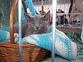 MTP Cat Show 2230016.JPG