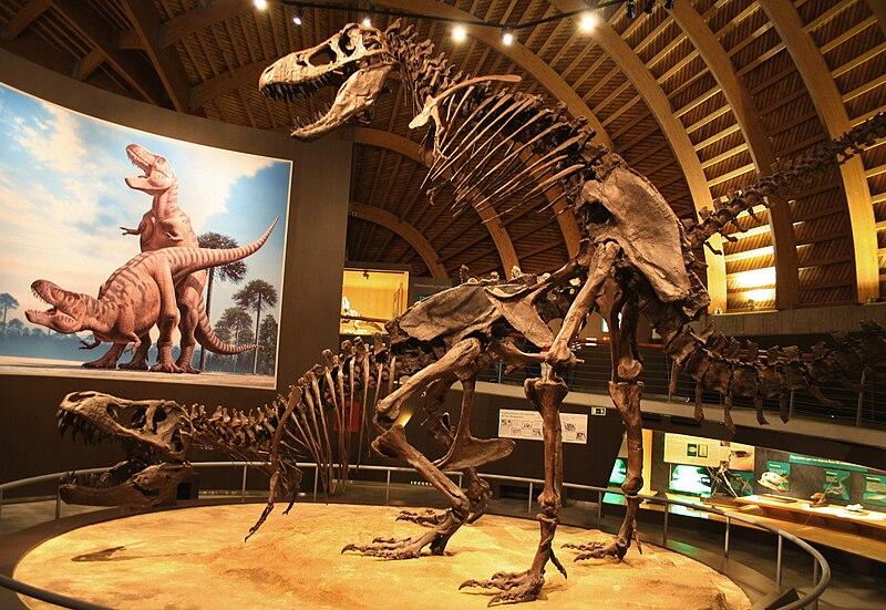 File:MUJA-Tyrannosaurus.JPG