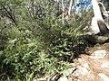 Magnoliophyta sp. (27521241667).jpg