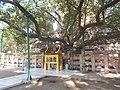 Mahabodhi Temple, Bodhgaya 1 (74).jpg