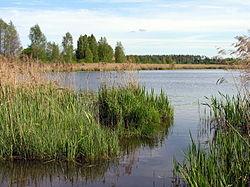Maigu ezeras.z., 2006-06-03.JPG