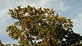 Majestic trees - panoramio.jpg
