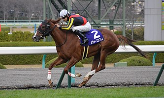 Major Emblem Hanshin Juvenile Fillies 2015(IMG1).jpg