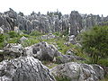 Major Stone Forest NE outer area 13.JPG