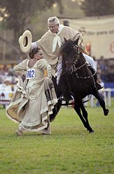 Peruvian Paso horse festival during marinera and spring