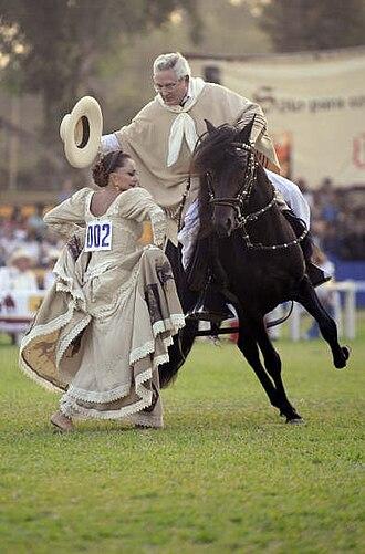 Poncho - A Peruvian chalán dancing marinera on a peruvian paso horse.