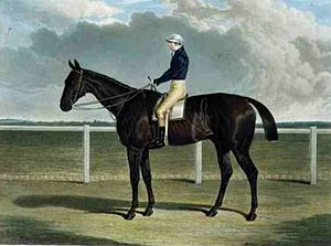 Margrave (horse) - Margrave', the Winner of the Great St. Leger Stakes at Doncaster, 1832 by John Frederick Herring, Sr.