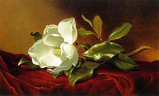 A Magnolia on Red Velvet
