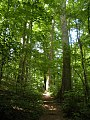 Mature Beech Forest, Fort Hill State Park, Hillsboro, Ohio.jpg