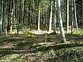 May Hochschwarzwald Mount Kandel 1300 mtr wilderness - Master Mythos Black Forest Photography 2013 former bear land - panoramio (5).jpg