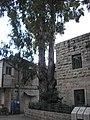 Mazkeret Moshe P2080023.JPG