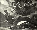 McClure's magazine (1893) (14786711043).jpg