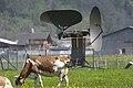 Meiringen Airbase Radar mit Kuh.jpg
