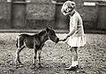 Meisje met veulen - One week old foal (5680140582).jpg
