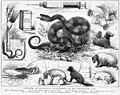 Melbourne Gaol experiments - Australasian Sketcher 17 Feb 1877 p184 (12599532663).jpg