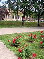 Melenci-roses.jpg