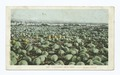 Melon Field, California (NYPL b12647398-66736).tiff