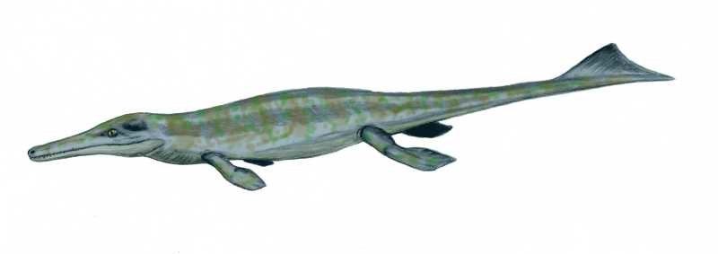 Metriorhynchus BW