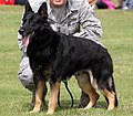 Military Working Dog - American Air Day 2012 (7831960226).2.jpg
