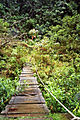 Mindo-Cloud-Forest-15.jpg