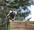 Monkey (160292075).jpeg