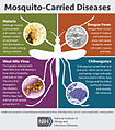 Mosquito-Carried Diseases (20565047612).jpg