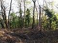 Motte castrale de Saint-André de Corcy - Sommet.jpg