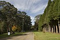 Mount Wilson NSW 2786, Australia - panoramio (60).jpg