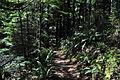 Mt. Walker Trail 02.jpg