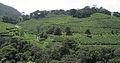 Munnar - views from Munnar (3).jpg