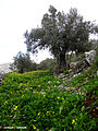 Nablus 3.jpg