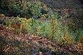 Naturally-regenerating birch woodland - geograph.org.uk - 594923.jpg