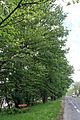 Naturdenkmal Hermesstrasse.jpg