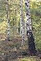 Naturschutzgebiet Syrau-Kauschwitzer Heide 13.jpg