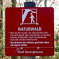 Naturwald - Barsinghausen.jpg