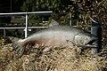 Near Underwood, WA, Chinook Salmon Sculpture, Spring Creek National Fish Hatchery, 2008 - panoramio.jpg