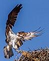 Nest Inspection (16559578840).jpg