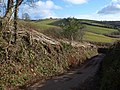 New-laid hedge near Coffinswell - geograph.org.uk - 1728543.jpg