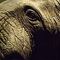 New York City elephant.jpg